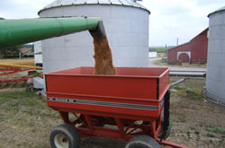 Unloading soybeans in a red hopper wagon